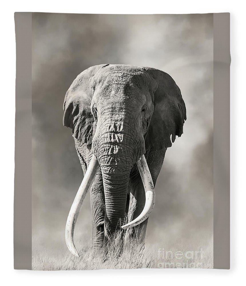 Male Fleece Blanket featuring the photograph Giant Tusked Bull Elephant In Amboseli, Kenya by Jane Rix