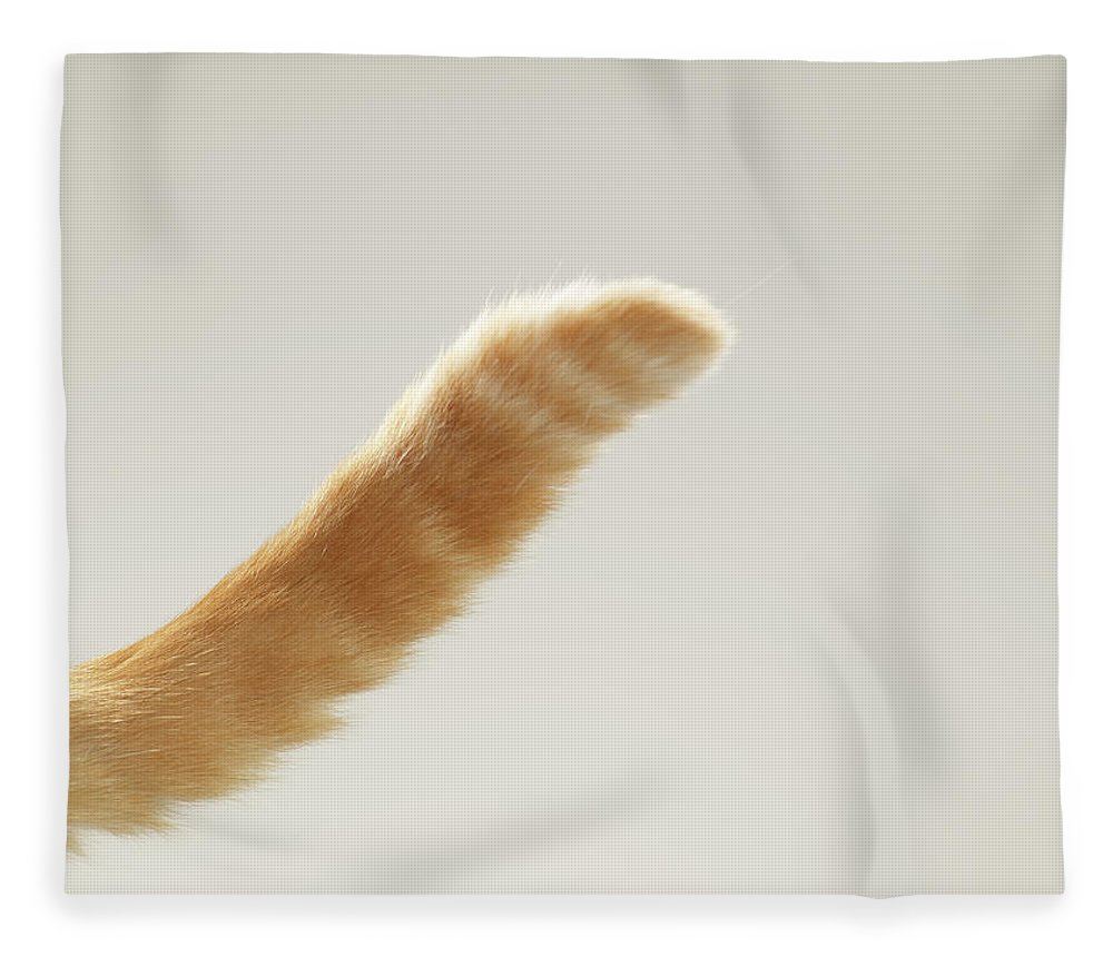 Pets Fleece Blanket featuring the photograph Ginger Tabby Cat Tail, Close-up by Michael Blann
