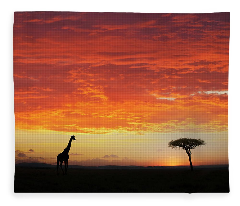 Kenya Fleece Blanket featuring the photograph Giraffe And Acacia Tree At Sunset by Buena Vista Images