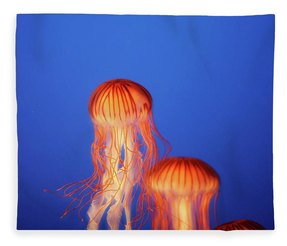 Underwater Fleece Blanket featuring the photograph Glowing Jellyfish Under Water by Indy Randhawa