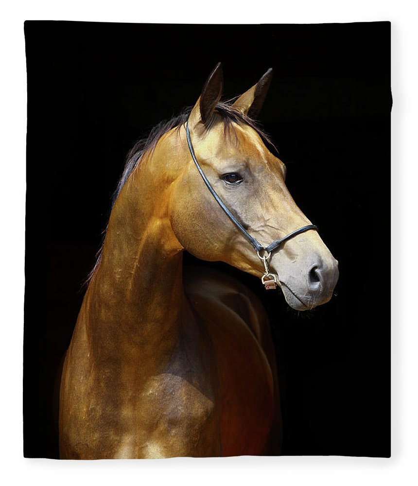 Horse Fleece Blanket featuring the photograph Golden Horse by Photographs By Maria Itina