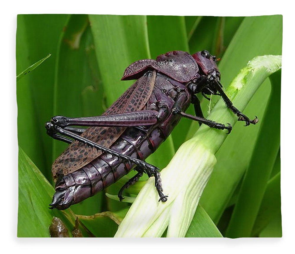 Fleece Blanket featuring the photograph Grasshopper by Stanley Vreedeveld
