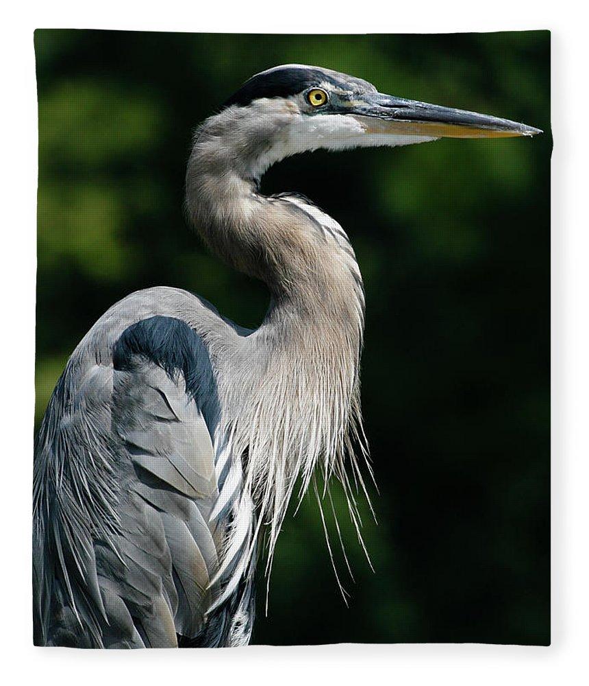 North Carolina Fleece Blanket featuring the photograph Great Blue Heron by Bill Swindaman