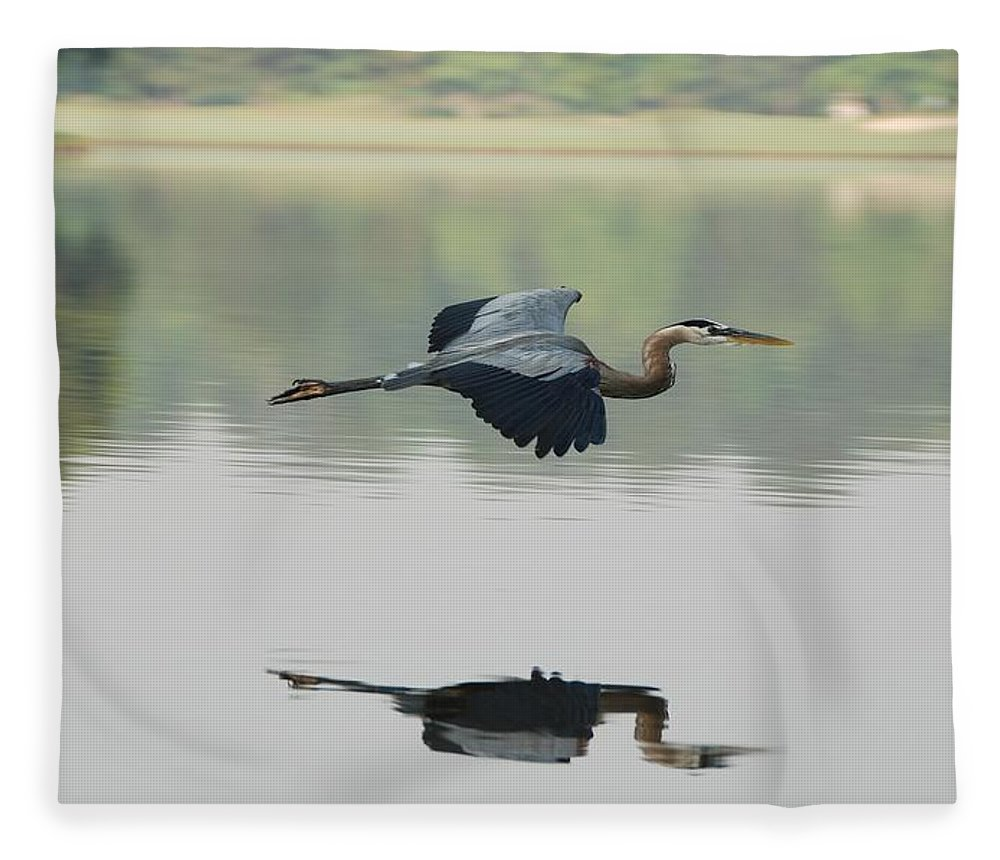 Animal Themes Fleece Blanket featuring the photograph Great Blue Heron In Flight by Photo By Hannu & Hannele, Kingwood, Tx