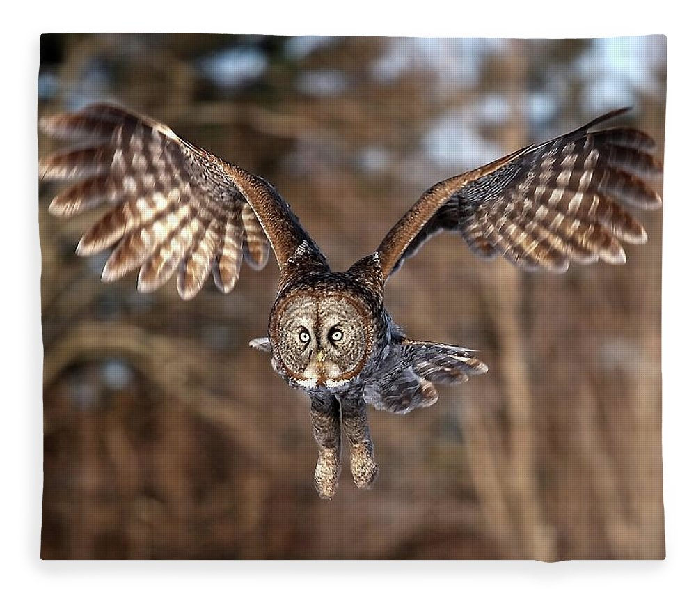 Animal Themes Fleece Blanket featuring the photograph Great Gray Owl Swoops Down by Jim Cumming