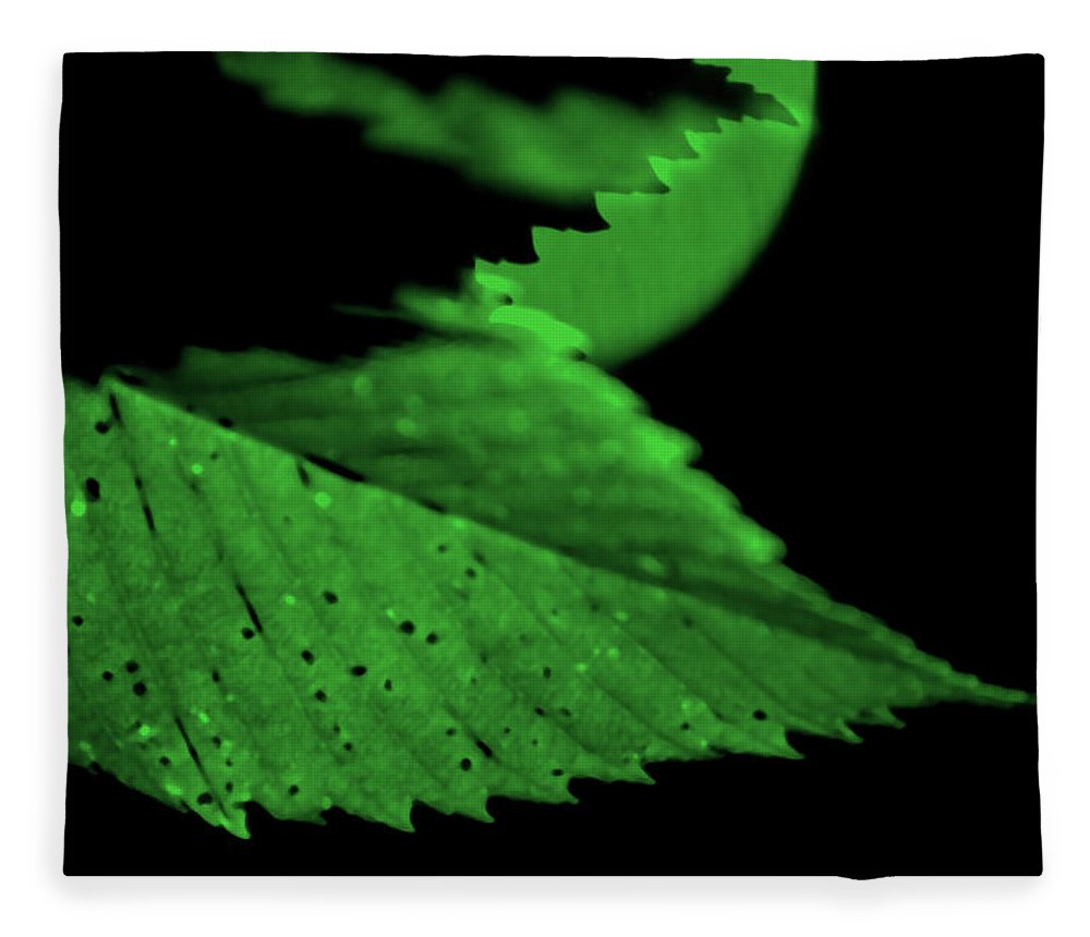 Leaf Fleece Blanket featuring the photograph Green Leaf in Sun by Lonnie Paulson
