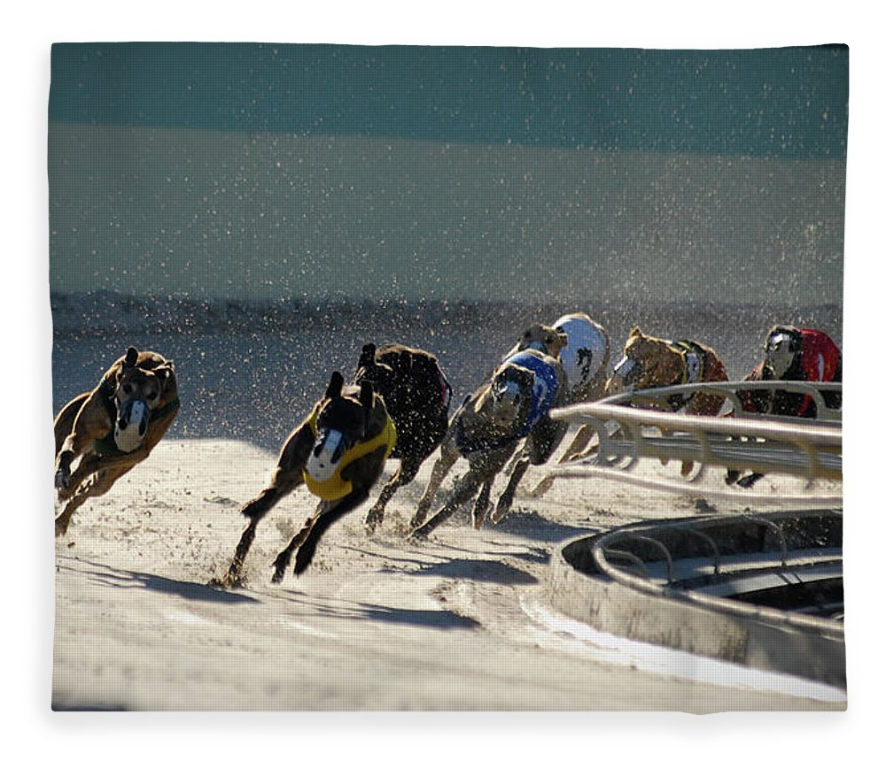 Dust Fleece Blanket featuring the photograph Greyounds 3 Of 7 by Dplight
