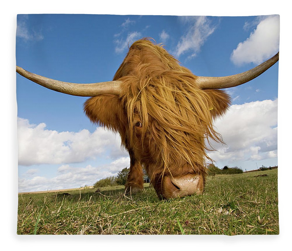 Horned Fleece Blanket featuring the photograph Hairy, Horned, Highland Cow Grazing by Clarkandcompany