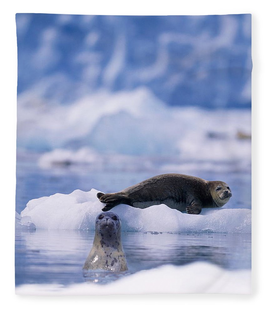 Animal Themes Fleece Blanket featuring the photograph Harbor Seal Phoca Vitulina In Glacial by Paul Souders