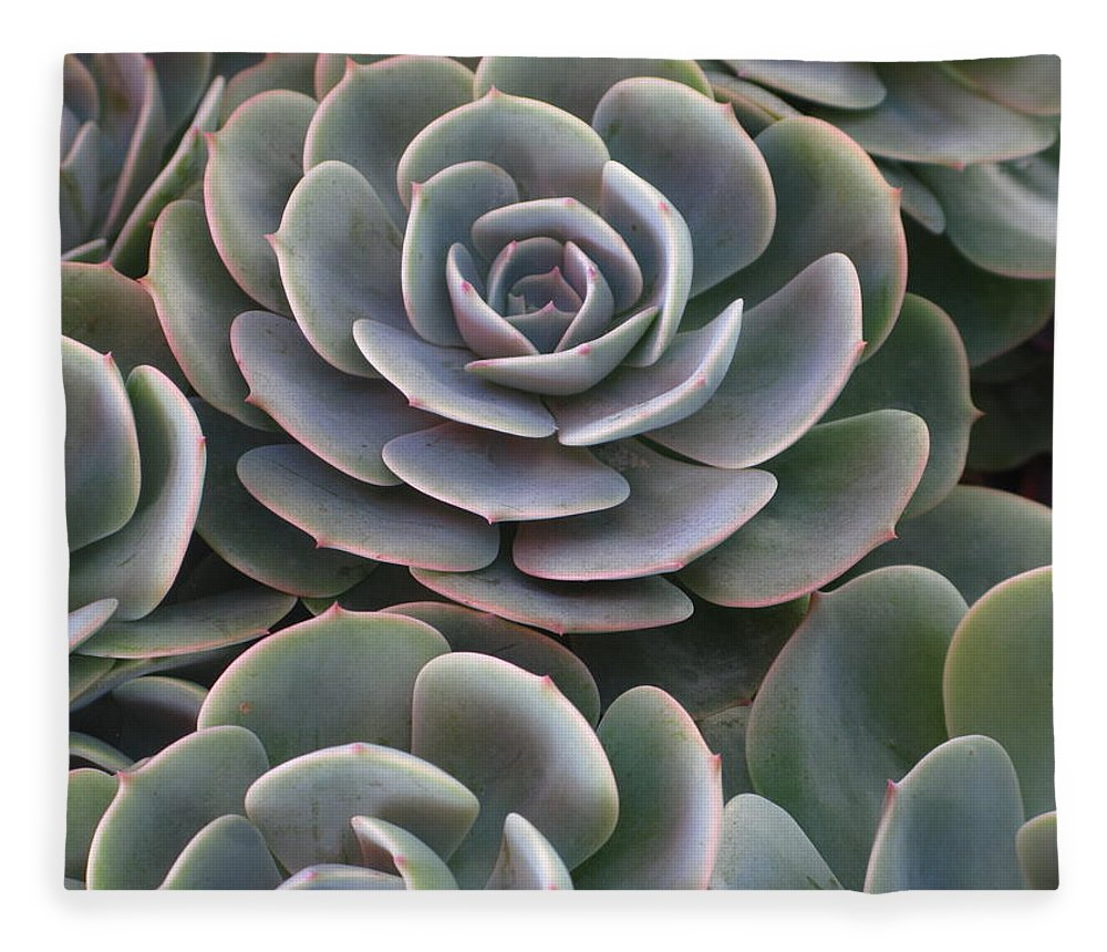 Scenics Fleece Blanket featuring the photograph Hens And Chicks Plant Full Frame by Sassy1902