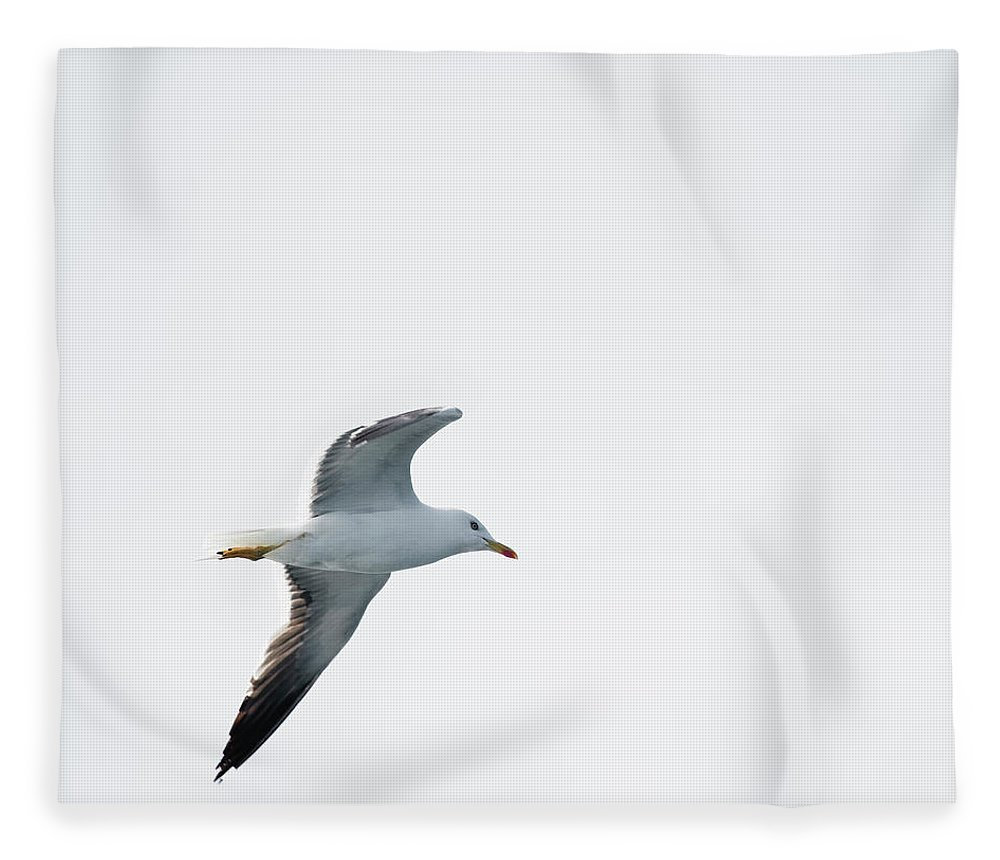 Sweden Fleece Blanket featuring the photograph Herring Gull In Flight by Magnusson, Roine