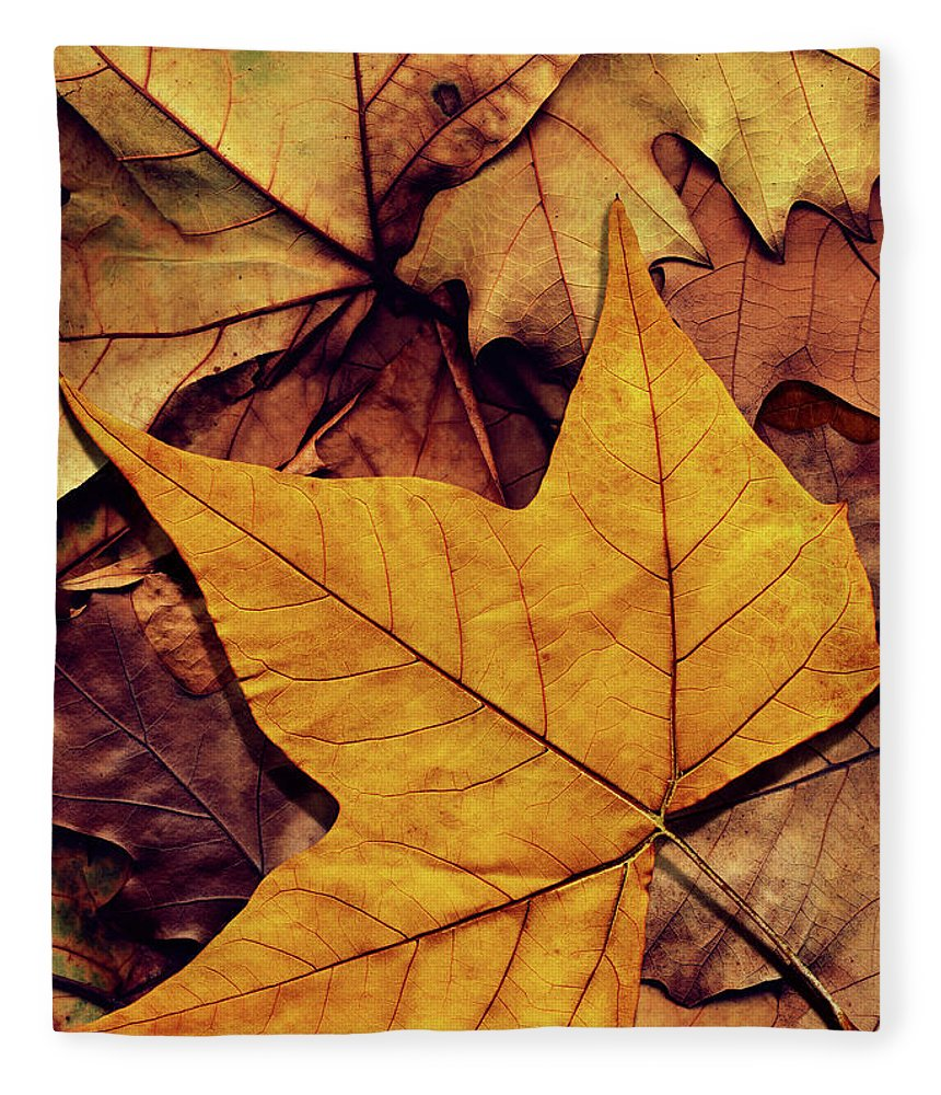 Orange Color Fleece Blanket featuring the photograph High Resolution Dry Maple Leaf On by Miroslav Boskov