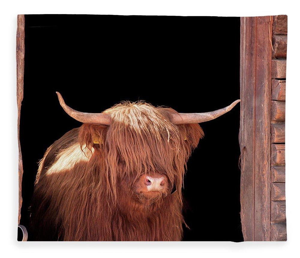 Horned Fleece Blanket featuring the photograph Highland Cattle In Barn Door by Kerrick