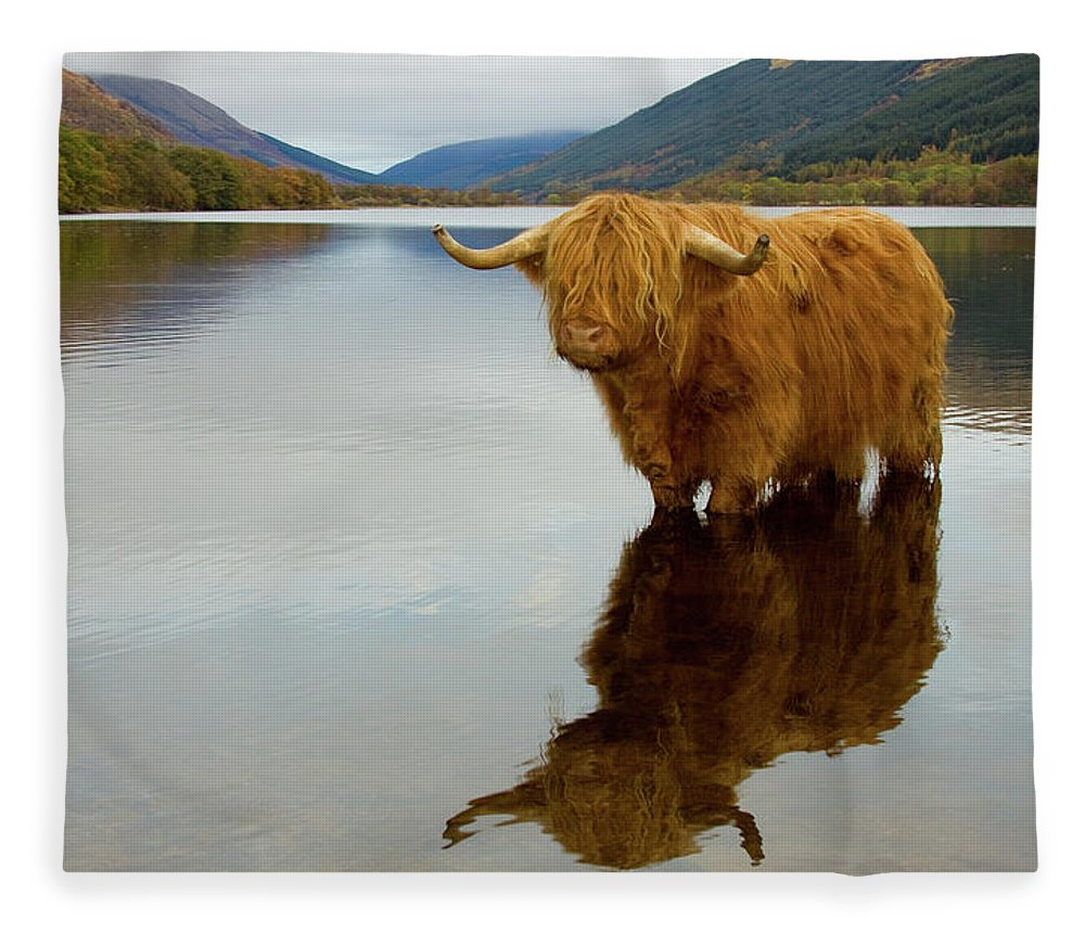 Horned Fleece Blanket featuring the photograph Highland Cow by Empato