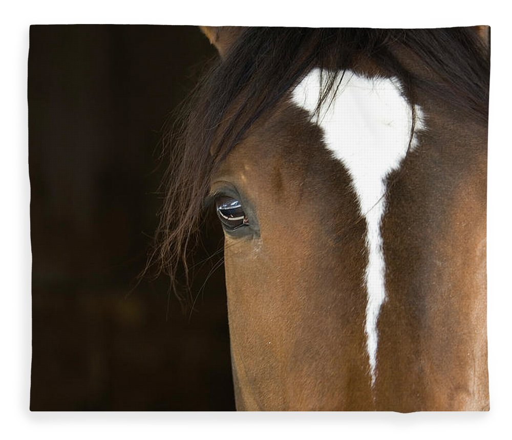 Horse Fleece Blanket featuring the photograph Horse Head by Rterry126
