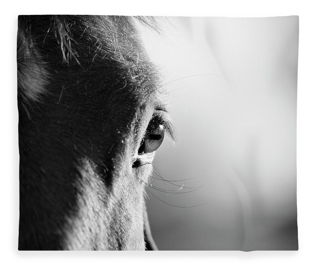 Horse Fleece Blanket featuring the photograph Horse In Black And White by Malcolm Macgregor