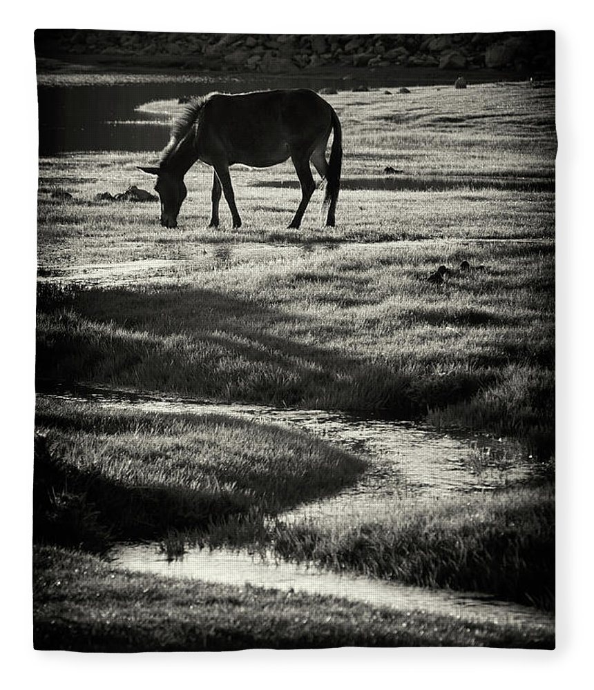 Horse Fleece Blanket featuring the photograph Horse by Muratseyit