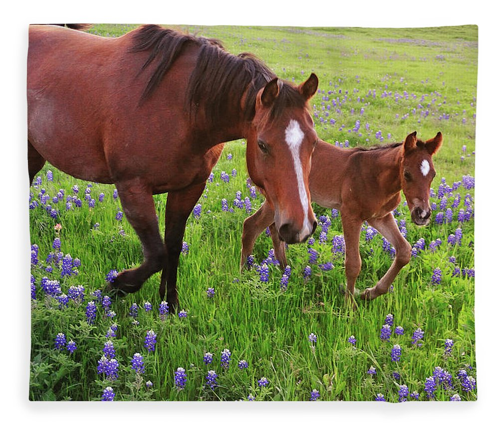 Horse Fleece Blanket featuring the photograph Horse On Bluebonnet Trail by David Hensley