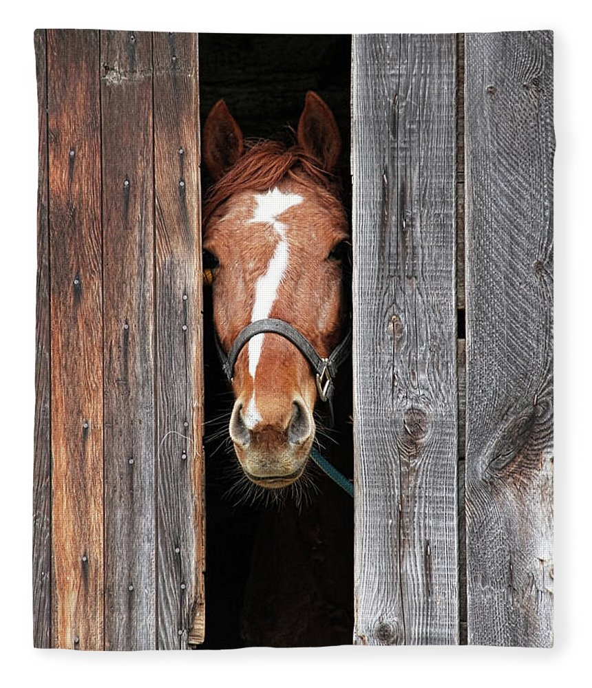 Horse Fleece Blanket featuring the photograph Horse Peeking Out Of The Barn Door by 2ndlookgraphics