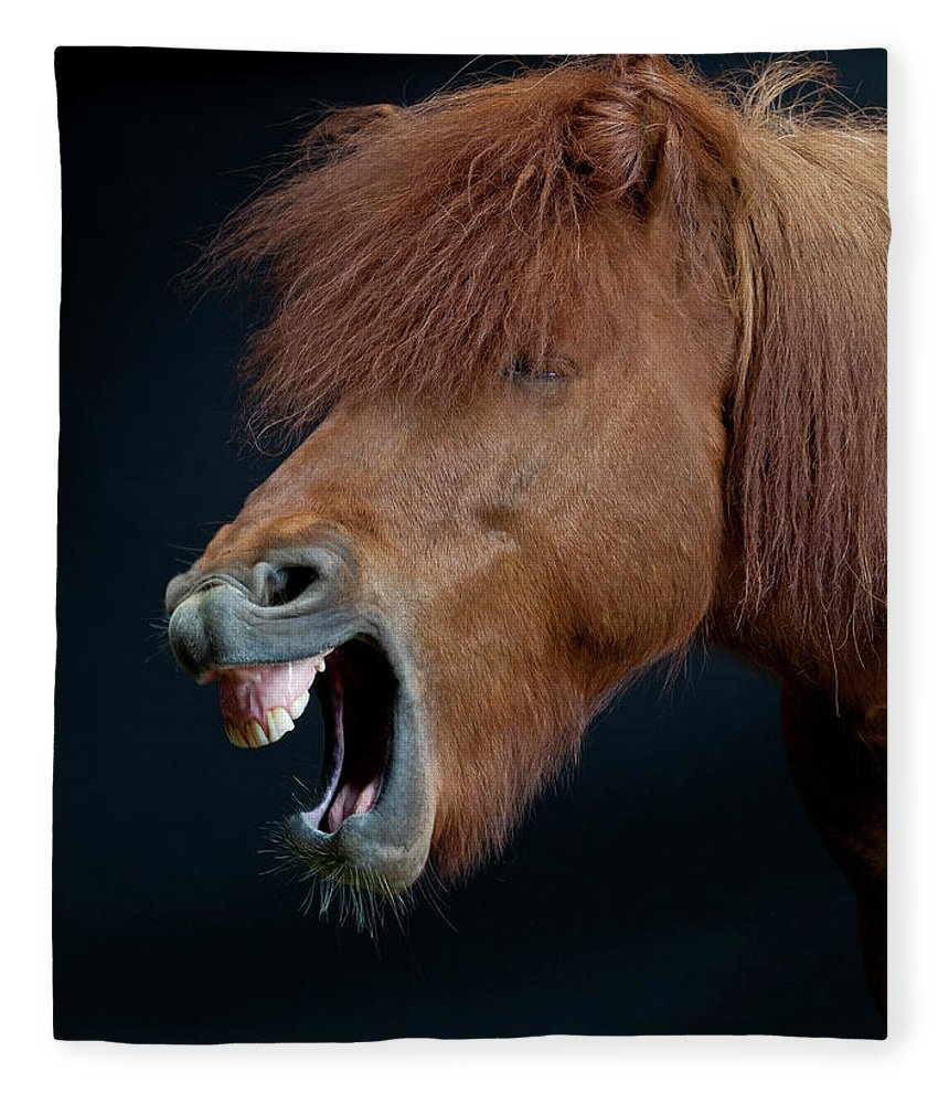 Horse Fleece Blanket featuring the photograph Horse Showing Teeth, Laughing by Arctic-images
