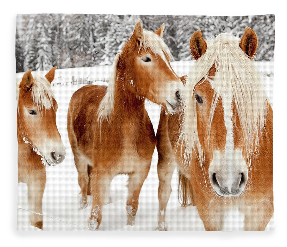 Horse Fleece Blanket featuring the photograph Horses In White Winter Landscape by Angiephotos