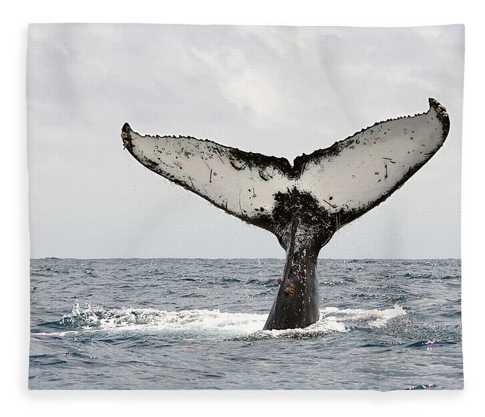 Animal Themes Fleece Blanket featuring the photograph Humpback Whale Tail by Photography By Jessie Reeder