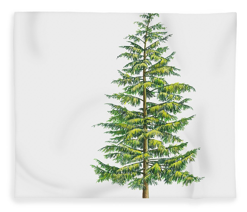 Watercolor Painting Fleece Blanket featuring the digital art Illustration Of Large Evergreen Tsuga by Sue Oldfield
