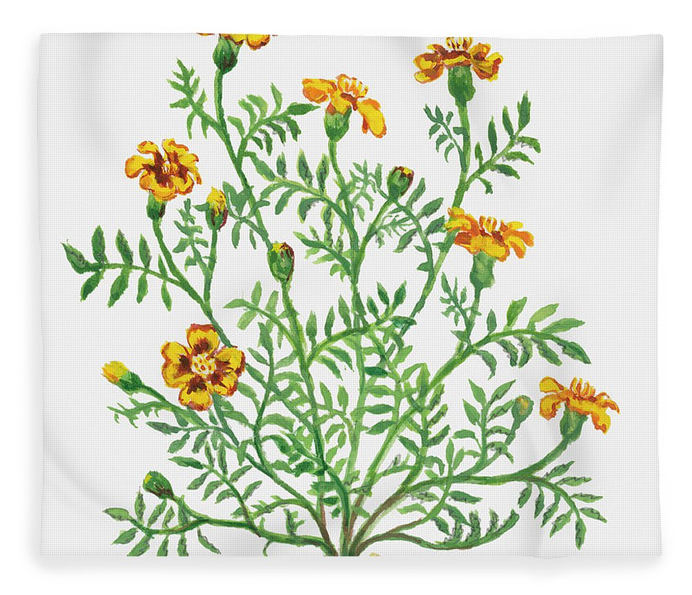 Long Fleece Blanket featuring the digital art Illustration Of Tagetes Patula French by Dorling Kindersley