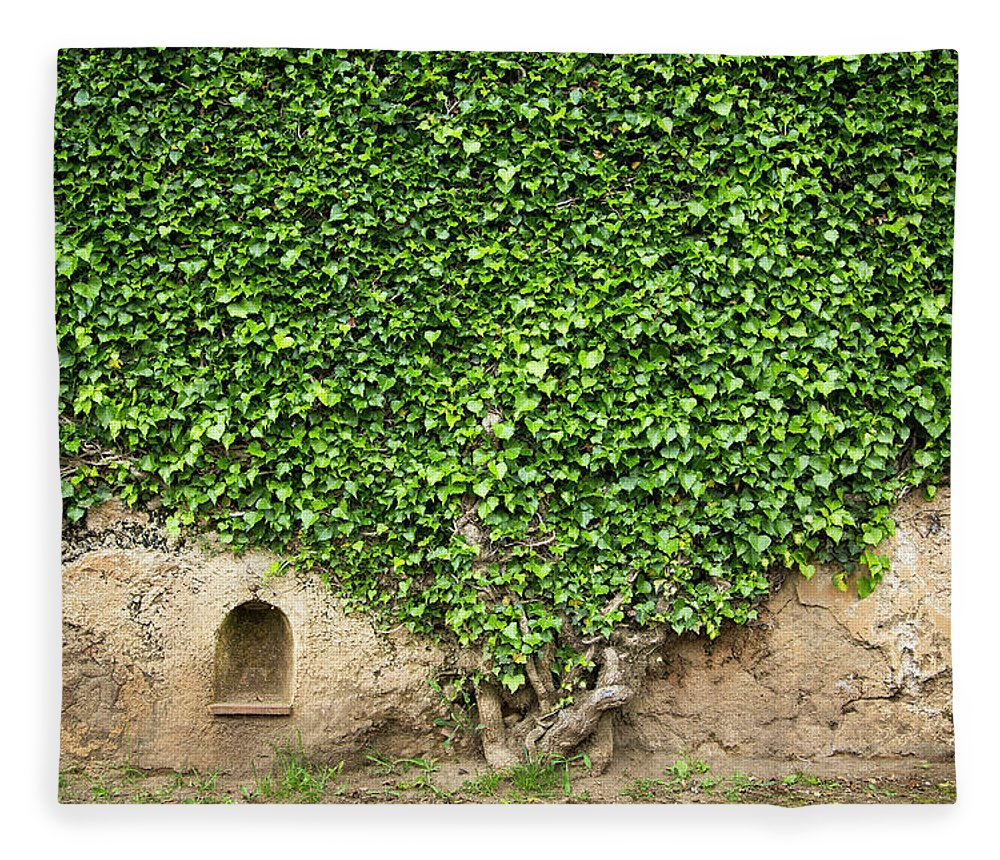 Arch Fleece Blanket featuring the photograph Ivy On A Wall Of Villa Cimbrone, Ravello by Buena Vista Images