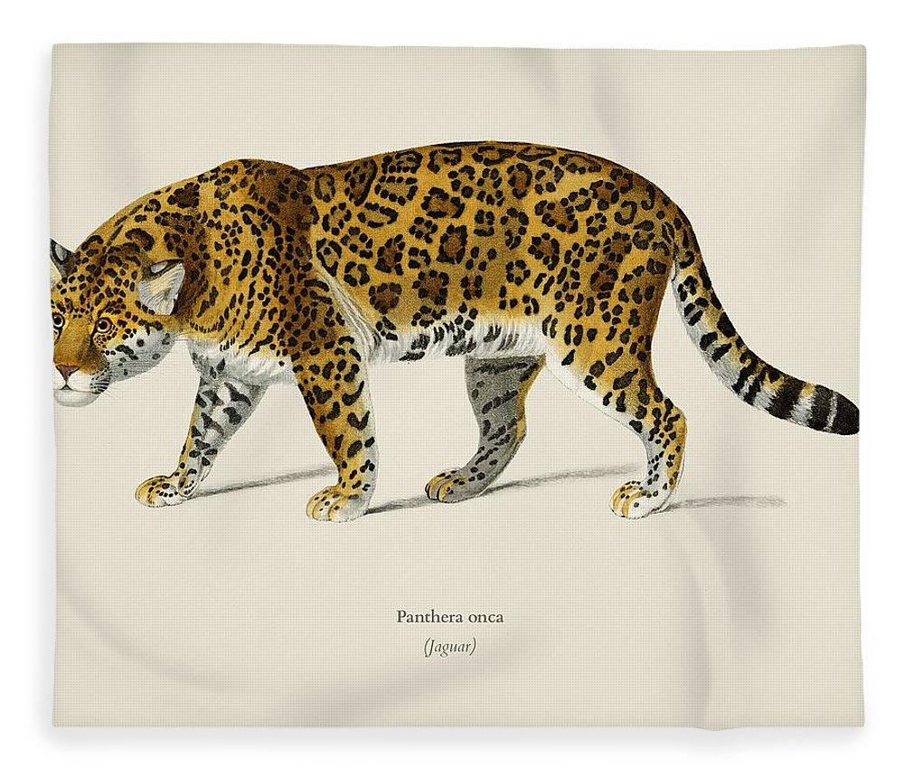 Animal Fleece Blanket featuring the painting Jaguar Panthera Onca Illustrated By Charles Dessalines D' Orbigny 1806-1876 by Celestial Images