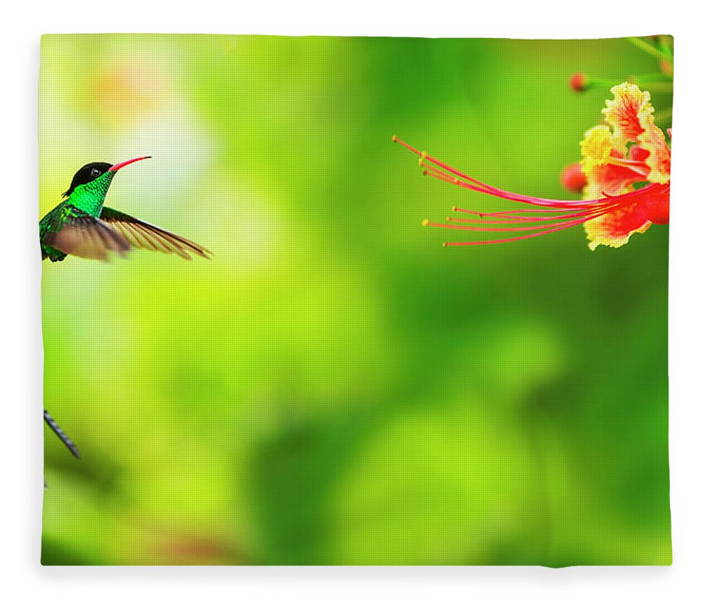 One Animal Fleece Blanket featuring the photograph Jamaica, Hummingbird In Flight by Tetra Images