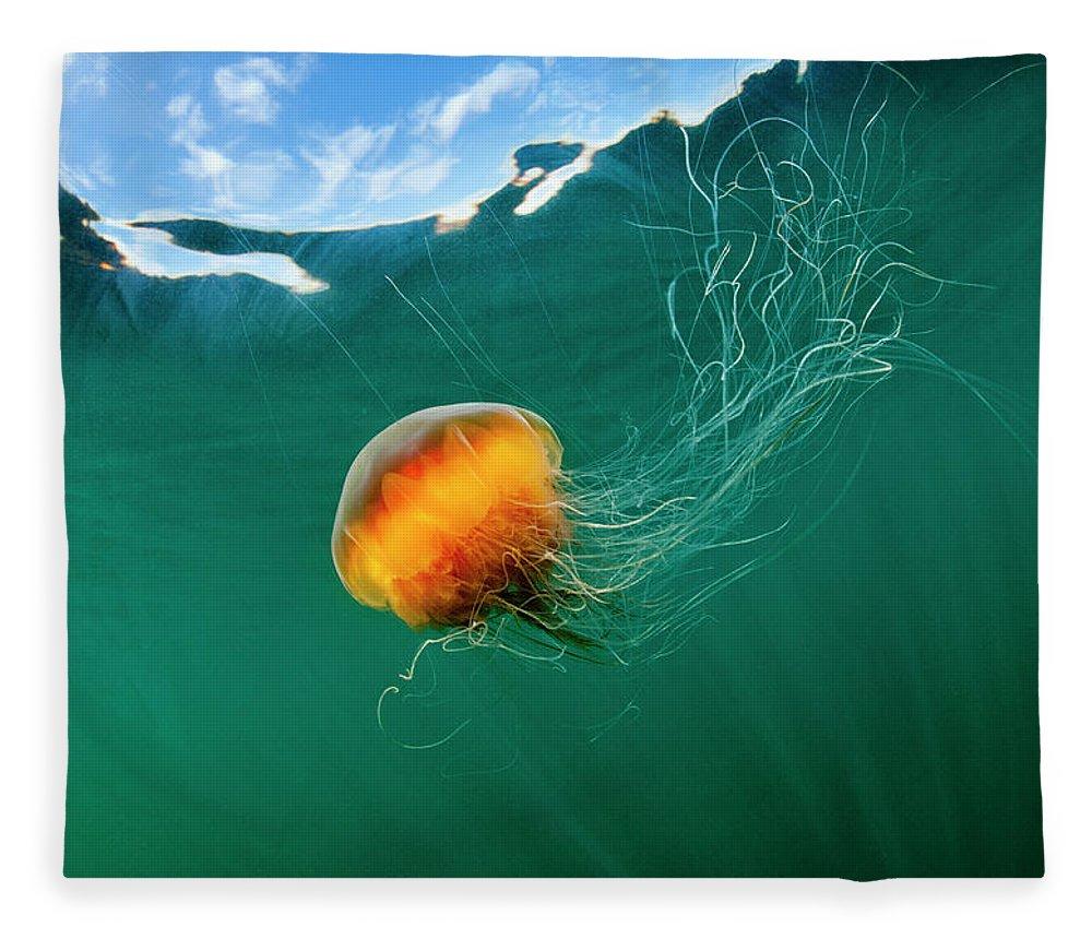 Underwater Fleece Blanket featuring the photograph Jellyfish, Alaska by Paul Souders