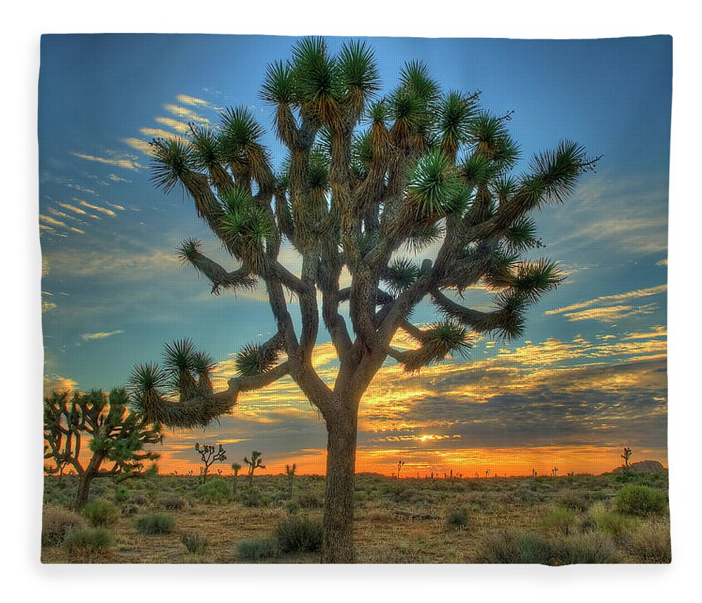 Scenics Fleece Blanket featuring the photograph Joshua Tree At Sunrise by Photograph By Kyle Hammons