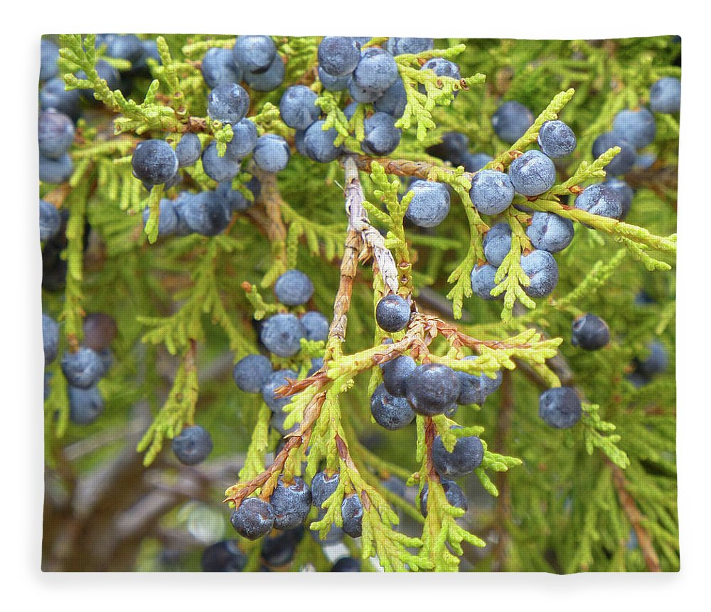 North Dakota Fleece Blanket featuring the photograph Juniper Berries by Cris Fulton
