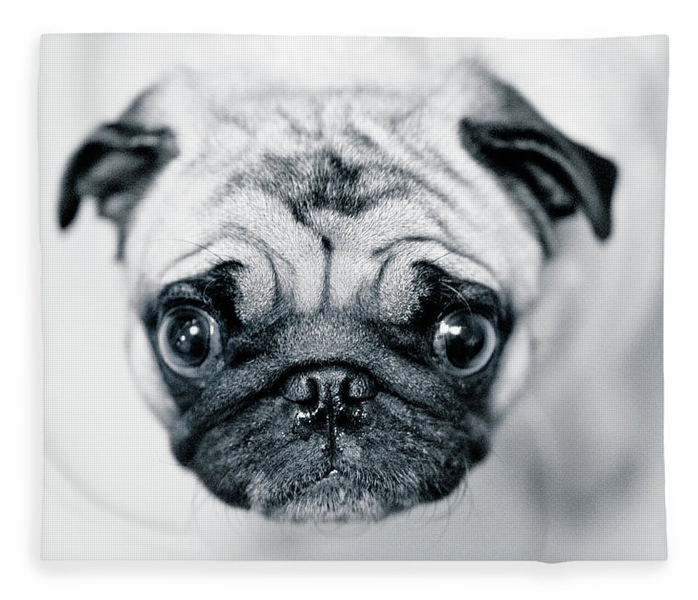 Pets Fleece Blanket featuring the photograph Just Enough by Eddy Joaquim