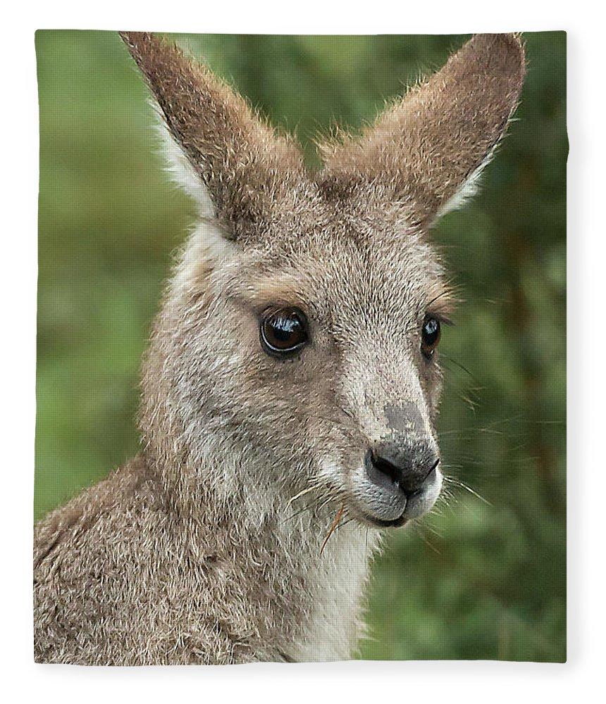 Kangaroo Fleece Blanket featuring the photograph Kangaroo Up Close by Barry Kearney