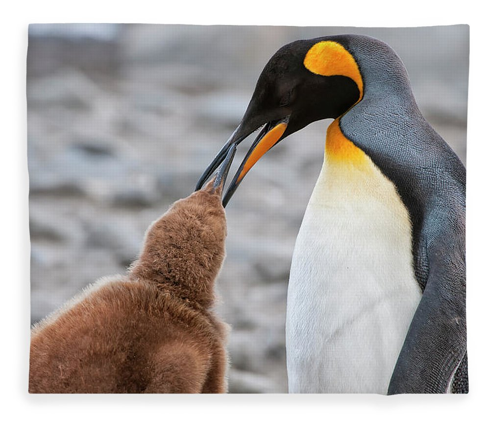Care Fleece Blanket featuring the photograph King Penguin Feeding A Chick by Gabrielle Therin-weise