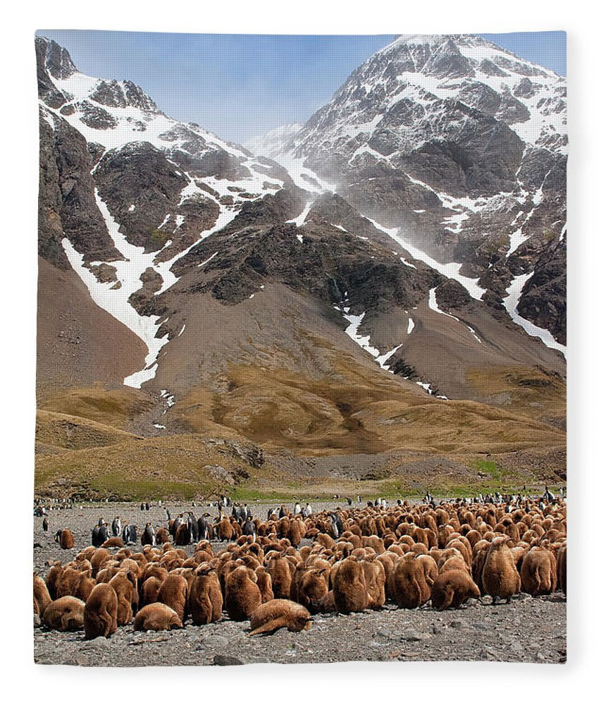 Scenics Fleece Blanket featuring the photograph King Penguins Aptenodytes Patagonicus by Gabrielle Therin-weise