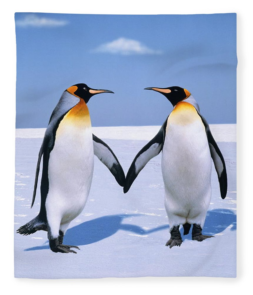 Shadow Fleece Blanket featuring the photograph King Penguins Aptenodytes Patagonicus by Johnny Johnson
