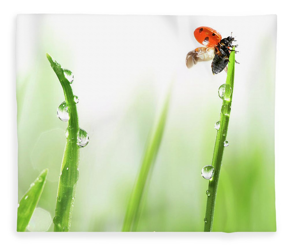 Hanging Fleece Blanket featuring the photograph Ladybug On Green Grass by Sbayram