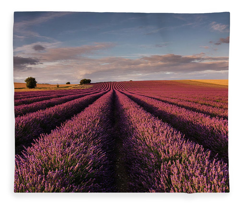 Scenics Fleece Blanket featuring the photograph Lavender Field by Paul Baggaley
