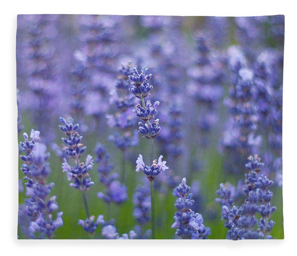 Otago Region Fleece Blanket featuring the photograph Lavender Flowers by Jill Ferry
