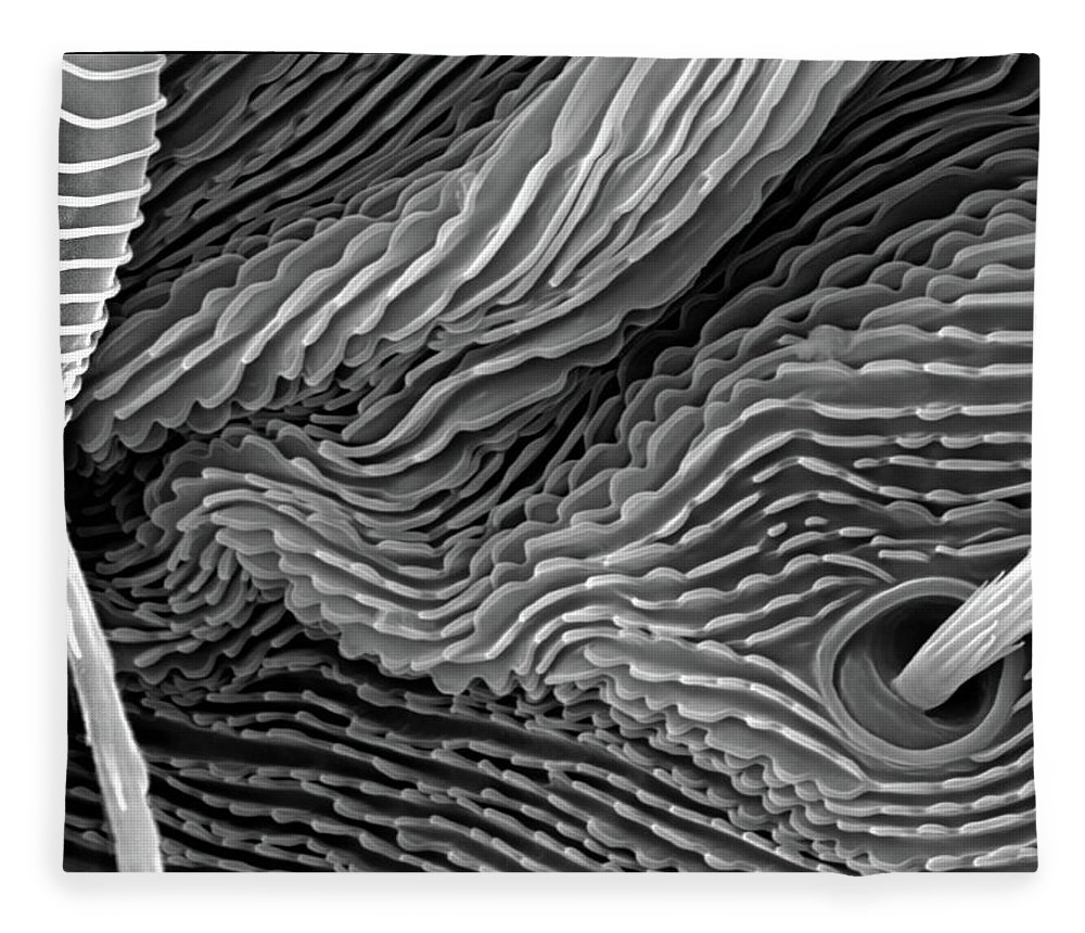Microscope Fleece Blanket featuring the photograph Lavender Leaf, Springtail, Sem by Sheri Neva