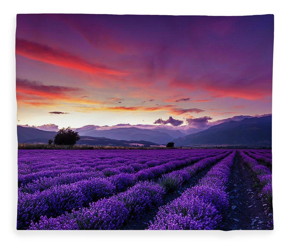 Dusk Fleece Blanket featuring the photograph Lavender Season by Evgeni Dinev
