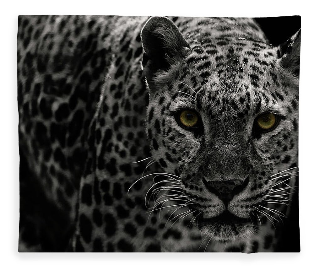 Big Cat Fleece Blanket featuring the photograph Leopard by Somak Pal