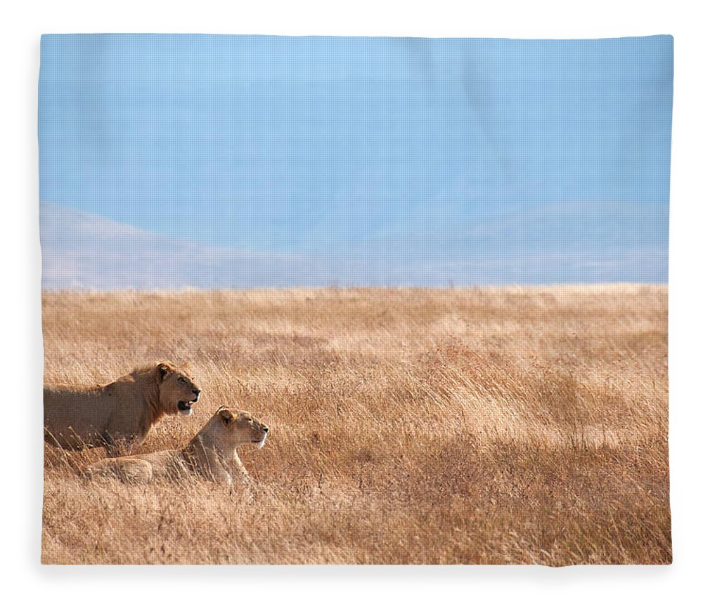 Scenics Fleece Blanket featuring the photograph Lion Couple In Ngorongoro Crater by Ceneri