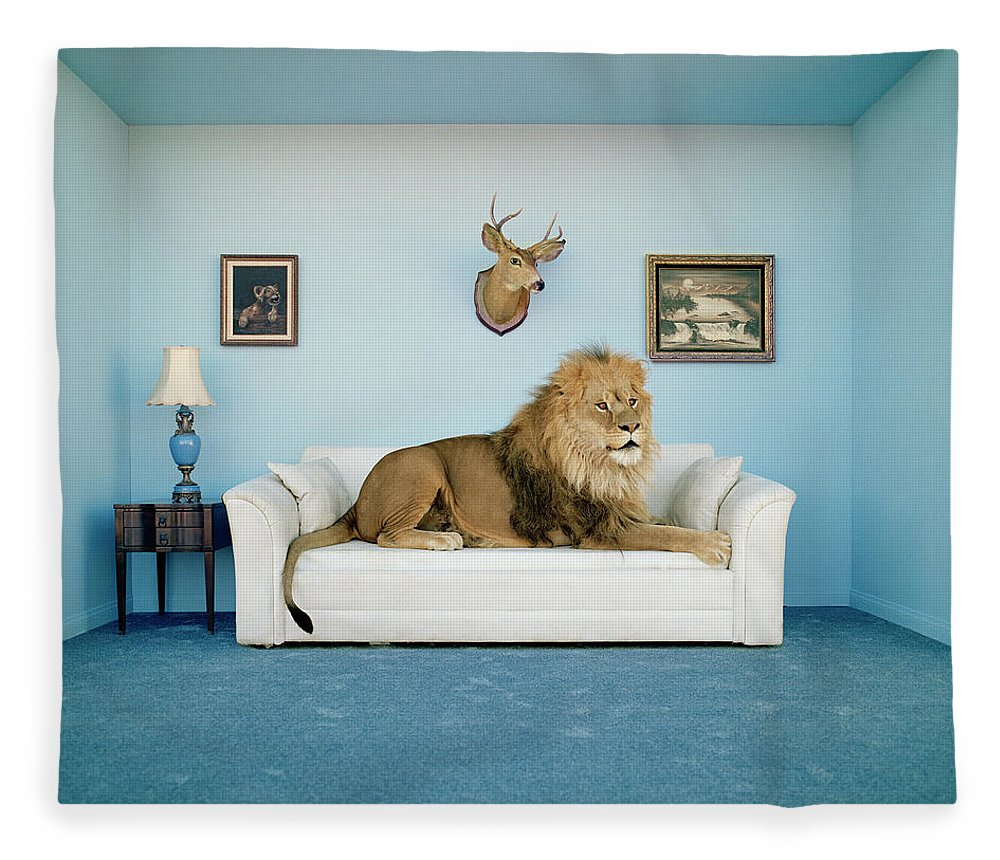 Pets Fleece Blanket featuring the photograph Lion Lying On Couch, Side View by Matthias Clamer