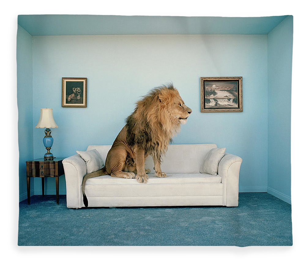 Pets Fleece Blanket featuring the photograph Lion Sitting On Couch, Side View by Matthias Clamer