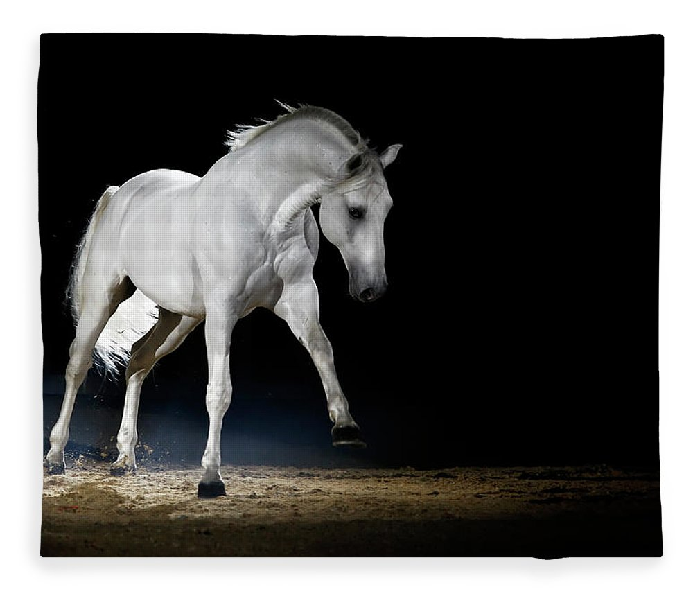 Horse Fleece Blanket featuring the photograph Lipizzaner Horse Playing by Somogyvari