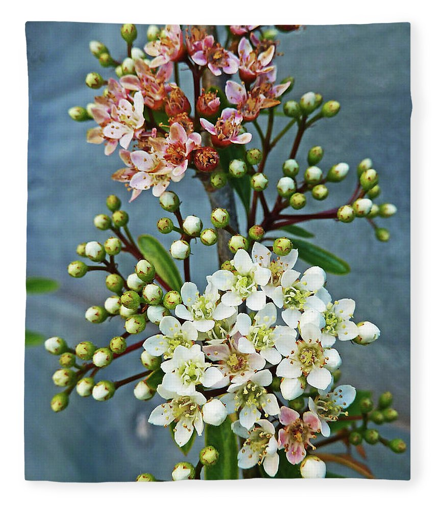 Bud Fleece Blanket featuring the photograph Little Star Like Buds by Steve Taylor Photography